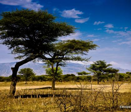 Communities regreen the Sahel to increase stability